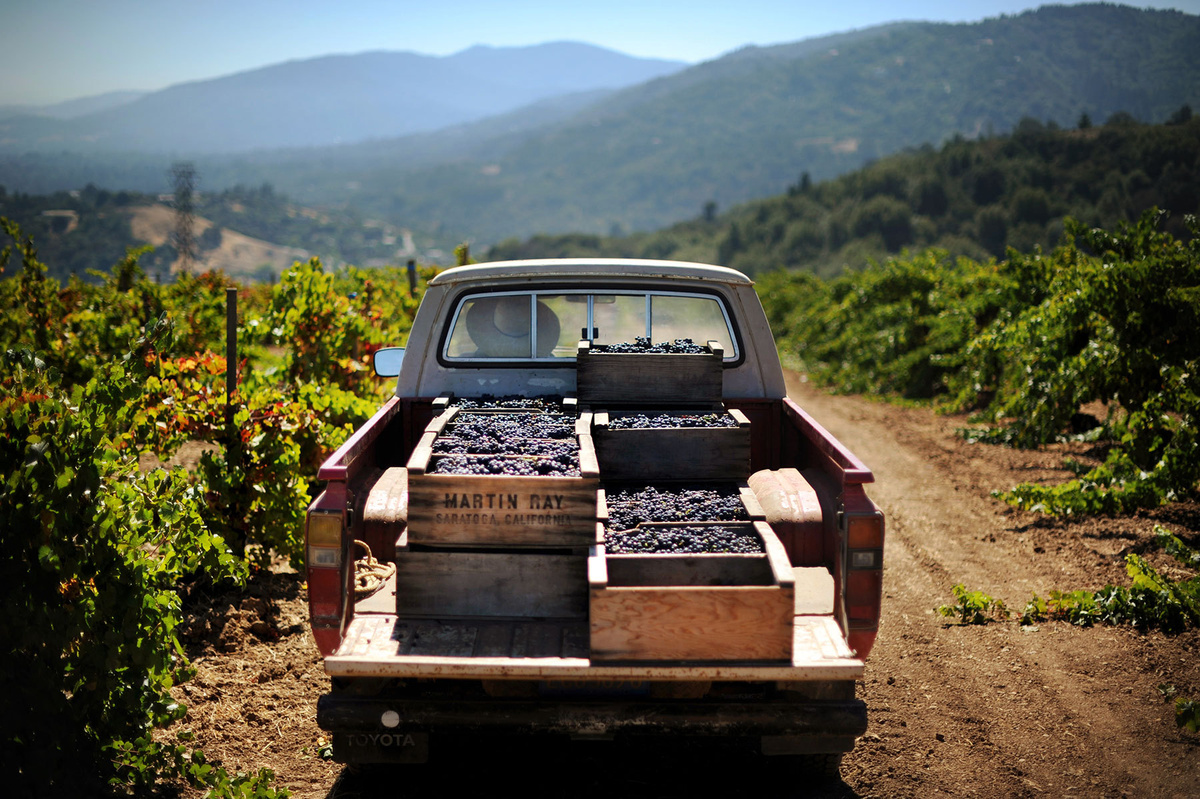 Peter Martin Ray Vineyard, Santa Cruz Mountains